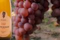 Vins Fins D'alsace Justin Boxler, Pinot Gris