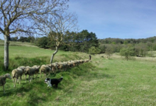 La ferme de Tarbes