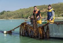 C-Weed Aquaculture. Algues alimentaires