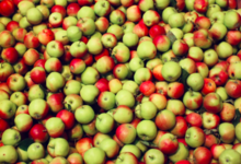 Ferme Fruitiere Rothgerber