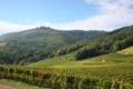 Vins d'Alsace Jean Luc Freudenreich