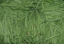 Le pig vert