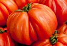 Légumes et saveurs. Tomates Coeur de Boeuf