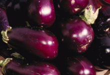 Légumes et saveurs. Aubergines
