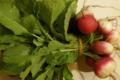 Légumes et saveurs. Botte de radis