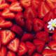 Tarte aux fraises, compotée de Framboise & crémeux citron