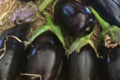 Domaine Mosconi. aubergine bio