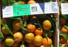 Alimea, fruits corses issus de l'agriculture biologique