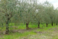 Domaine de Marquiliani