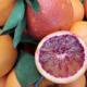 Alta Rocca Canistrelli. Orange sanguine