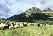 Clos Signadore - Aoc Patrimonio