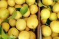 Domaine A Ronca. Citrons