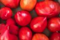 L'Ortu di San Ghjuvà. Tomate coeur de boeuf