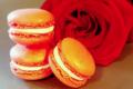 Elodie Gaffoglio. Macaron rose