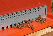 ruche - Miellerie l'affleure de vie