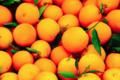 L'ortu di Biguglia. oranges