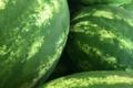 Grandi Fruits et légumes. Pastèque
