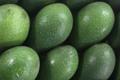 Grandi Fruits et légumes. Avocat Corse