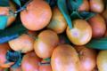 Grandi Fruits et légumes. clémentines