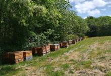 Les ruchers de la courcelle