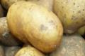 Gaec Antoinet, Pommes de terre Céphora