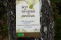 Sève de Bouleau du Limousin. Sève de bouleau fraîche