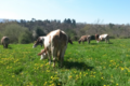 La ferme de Blandine