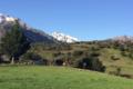 GAEC A Pasturella