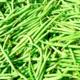 Ferme De Chouzenoux. haricots verts
