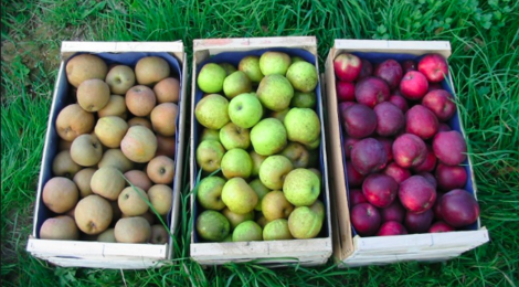 Le Verger Du Pré De Sagne. Pommes de table