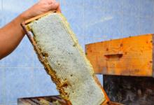 Délices des abeilles
