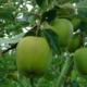 Les Vergers De Meilhac. Pommes