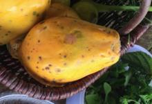 Les produits du Pic Ombo. Papaye