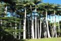 La ferme aux palmiers de la Ryawa