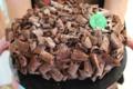 Chocolats Morand. Macarons. Concorde