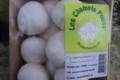 Les champis pouss. Champignon de Paris frais local