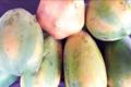 Le potager BIO de JB. Papaye