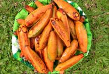 Tahiti Fenua Fruits. Banane