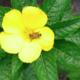 Kaina Bees