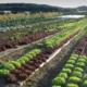 Jardins De Montplaisir