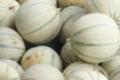 Jardins De Montplaisir. Melons