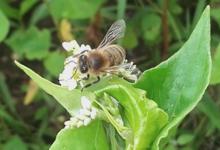 Les ruches de Noé