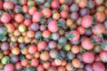 Jardin de la Bethune. tomate cerise