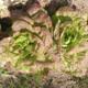 Jardin de la Bethune. salades