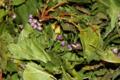 Les herbes vagabondes. Anti-rouille