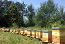 Les ruchers du Montreillois