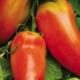 Cueillette du Tronquoy. Tomates cornue andine