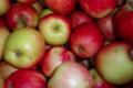 Les Vergers de Beauregard. Pommes Delbar Estival