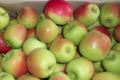 Les Vergers de Beaudignies. Pomme estivale