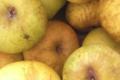 Les vergers bio d'Ohain. Pommes reinette du Héron bio